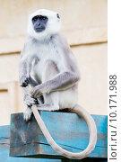 nature animal mammal fauna monkey, фото № 10171988, снято 29 марта 2017 г. (c) PantherMedia / Фотобанк Лори