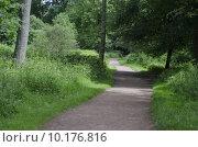 Купить «Pathway Through Woodland», фото № 10176816, снято 21 мая 2019 г. (c) PantherMedia / Фотобанк Лори