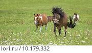 Купить «horse stallion mare gelding willow», фото № 10179332, снято 21 марта 2019 г. (c) PantherMedia / Фотобанк Лори