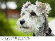 Купить «Dog outdoors», фото № 10205176, снято 17 февраля 2020 г. (c) PantherMedia / Фотобанк Лори
