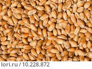 Купить «food grain wheat corn cereal», фото № 10228872, снято 21 сентября 2018 г. (c) PantherMedia / Фотобанк Лори