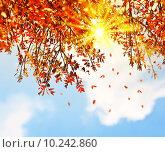Купить «Beautiful autumn tree leaves background border», фото № 10242860, снято 19 сентября 2018 г. (c) PantherMedia / Фотобанк Лори
