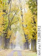 Купить «autumnal alley», фото № 10288012, снято 25 января 2020 г. (c) PantherMedia / Фотобанк Лори