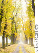 Купить «autumnal alley», фото № 10288076, снято 25 января 2020 г. (c) PantherMedia / Фотобанк Лори