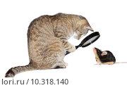 Купить «Cat with myopia», фото № 10318140, снято 6 декабря 2019 г. (c) PantherMedia / Фотобанк Лори