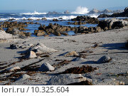 Купить «elephant seal seals seeelefant seeelefanten», фото № 10325604, снято 27 июня 2019 г. (c) PantherMedia / Фотобанк Лори