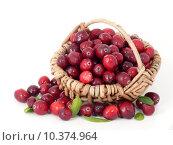 Купить «berries cranberry cranberries kraanbeere kranichbeere», фото № 10374964, снято 27 марта 2019 г. (c) PantherMedia / Фотобанк Лори