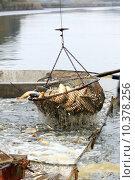 Купить «Autumn harvest of carps from fishpond to christmas markets in Czech republic. In», фото № 10378256, снято 20 апреля 2019 г. (c) PantherMedia / Фотобанк Лори
