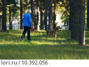 Мужчина выгуливает собаку в парке. Стоковое фото, фотограф Игорь Опойков / Фотобанк Лори