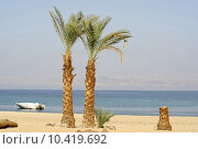 Купить «palm trees on beach resort, red sea sinai, egypt», фото № 10419692, снято 20 февраля 2019 г. (c) PantherMedia / Фотобанк Лори
