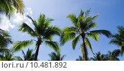 Купить « palm tree », фото № 10481892, снято 20 февраля 2019 г. (c) PantherMedia / Фотобанк Лори