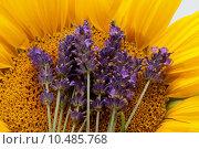 Купить «Sunflowers and Lavender», фото № 10485768, снято 15 сентября 2019 г. (c) PantherMedia / Фотобанк Лори