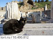 Купить «Кошки на развалинах античного города Эфес. Турция», фото № 10490812, снято 18 ноября 2018 г. (c) Уфимцева Екатерина / Фотобанк Лори