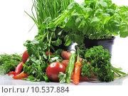Купить «parsley paprika peppers carrots lovage», фото № 10537884, снято 5 июля 2020 г. (c) PantherMedia / Фотобанк Лори