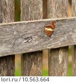 Купить «australian butterfly resting on wood paling fence», фото № 10563664, снято 10 декабря 2018 г. (c) PantherMedia / Фотобанк Лори