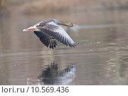 Купить «fly wing flying flight feathers», фото № 10569436, снято 23 ноября 2019 г. (c) PantherMedia / Фотобанк Лори