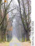 Купить «autumnal alley», фото № 10587692, снято 25 января 2020 г. (c) PantherMedia / Фотобанк Лори
