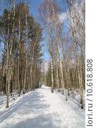 Купить «tree forest path germany way», фото № 10618808, снято 21 мая 2018 г. (c) PantherMedia / Фотобанк Лори