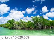 Купить «mangrove trees », фото № 10620508, снято 21 мая 2018 г. (c) PantherMedia / Фотобанк Лори