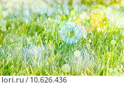 Купить «Ethereal Spring background», фото № 10626436, снято 24 января 2019 г. (c) PantherMedia / Фотобанк Лори