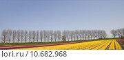 Купить «tulip field  », фото № 10682968, снято 15 сентября 2019 г. (c) PantherMedia / Фотобанк Лори