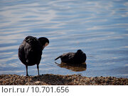 Купить «nature summer water animal sea», фото № 10701656, снято 13 ноября 2018 г. (c) PantherMedia / Фотобанк Лори