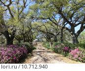Купить «avenue calibrate rhododendron louisiana bromelien», фото № 10712940, снято 25 марта 2019 г. (c) PantherMedia / Фотобанк Лори
