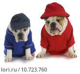 Купить «two dogs», фото № 10723760, снято 24 января 2019 г. (c) PantherMedia / Фотобанк Лори