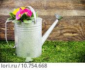 Купить «Old galvanised metal watering can», фото № 10754668, снято 15 сентября 2019 г. (c) PantherMedia / Фотобанк Лори