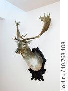 Купить «Deer trophy», фото № 10768108, снято 18 февраля 2019 г. (c) PantherMedia / Фотобанк Лори