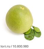 Купить «Pomelo or Chinese grapefruit», фото № 10800980, снято 19 июня 2019 г. (c) PantherMedia / Фотобанк Лори