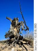 Купить «Wood in the desert of New Mexico», фото № 10818980, снято 20 июня 2019 г. (c) PantherMedia / Фотобанк Лори