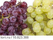 Купить «bunch of green and red grapes on a white background», фото № 10823388, снято 22 августа 2018 г. (c) PantherMedia / Фотобанк Лори