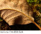 Купить «dry page sheet barren autumn», фото № 10859524, снято 15 октября 2019 г. (c) PantherMedia / Фотобанк Лори