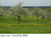 Купить «spring blossom bloom bavaria flourish», фото № 10876004, снято 23 марта 2019 г. (c) PantherMedia / Фотобанк Лори
