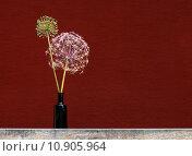 Купить «stem stalk leek allium amaryllis», фото № 10905964, снято 5 июня 2020 г. (c) PantherMedia / Фотобанк Лори