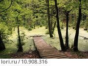 Купить «nature water forest pond fresh», фото № 10908316, снято 18 октября 2018 г. (c) PantherMedia / Фотобанк Лори