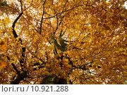 Купить «nature colour tree season forest», фото № 10921288, снято 19 августа 2019 г. (c) PantherMedia / Фотобанк Лори