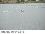 Купить «flamingos carotinoiden phoenicopteridae phoenicopteriformes pigmente», фото № 10940616, снято 18 октября 2018 г. (c) PantherMedia / Фотобанк Лори