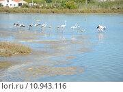 Купить «flamingos carotinoiden phoenicopteridae phoenicopteriformes rosafarbene», фото № 10943116, снято 18 октября 2018 г. (c) PantherMedia / Фотобанк Лори