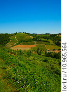 Landscape under blue sky with vineyard and fields. Стоковое фото, фотограф Fabio Alcini / PantherMedia / Фотобанк Лори