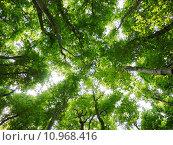 Купить «nature tree season forest recuperation», фото № 10968416, снято 20 сентября 2019 г. (c) PantherMedia / Фотобанк Лори