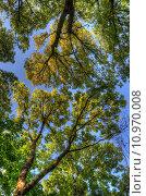 Trees branches with leaves, Mainz, Rheinland-Pfalz, Germany. Стоковое фото, фотограф Dmitry Orlov / PantherMedia / Фотобанк Лори