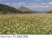 Купить «mountain blossom bloom mountains flowering», фото № 11004368, снято 15 сентября 2019 г. (c) PantherMedia / Фотобанк Лори