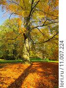 Купить «tree leaves page sheet trunk», фото № 11007224, снято 15 октября 2019 г. (c) PantherMedia / Фотобанк Лори