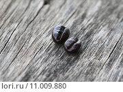 Купить «Coffee beans over the old wood texture background», фото № 11009880, снято 16 июня 2019 г. (c) PantherMedia / Фотобанк Лори