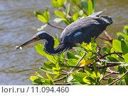 Купить «nature wildlife bird birds florida», фото № 11094460, снято 6 июля 2020 г. (c) PantherMedia / Фотобанк Лори
