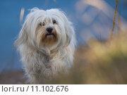Купить «nature outdoors outdoor pet dog», фото № 11102676, снято 22 августа 2019 г. (c) PantherMedia / Фотобанк Лори