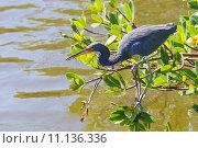 Купить «nature wildlife bird birds florida», фото № 11136336, снято 6 июля 2020 г. (c) PantherMedia / Фотобанк Лори
