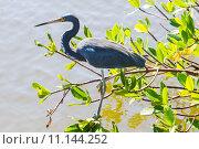 Купить «nature wildlife bird birds florida», фото № 11144252, снято 6 июля 2020 г. (c) PantherMedia / Фотобанк Лори